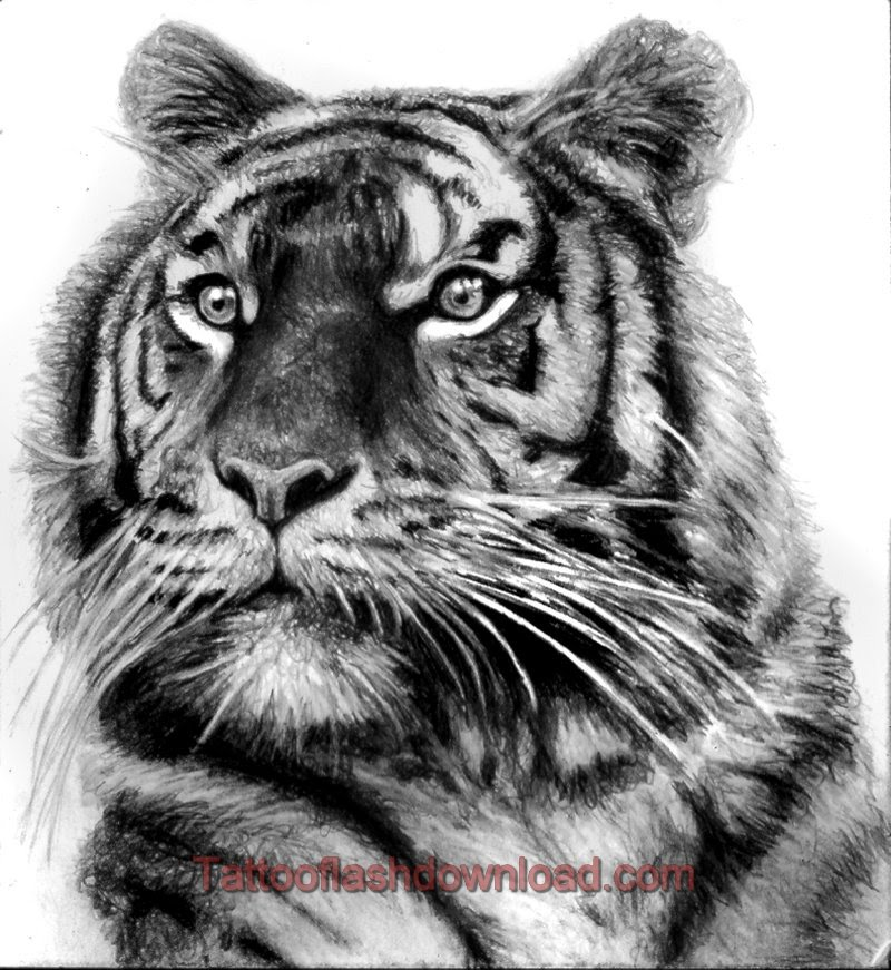 Grey And Black Tiger Tattoo Design