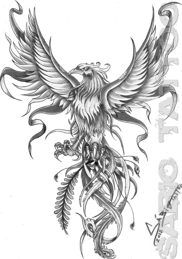 grey and white flying phoenix tattoo design. Black Bedroom Furniture Sets. Home Design Ideas