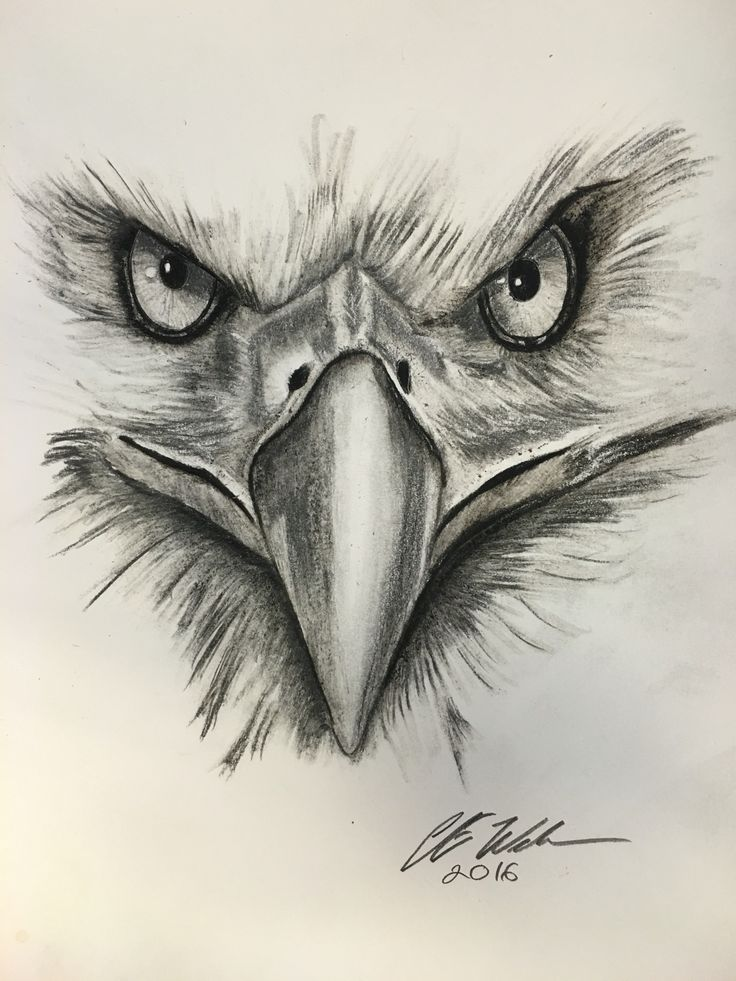 It is an image of Ridiculous Drawing Of Eagle