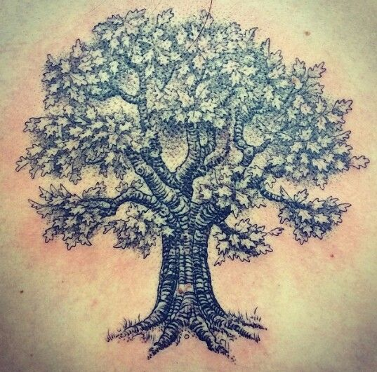 55 Latest Oak Tree Tattoos Collection
