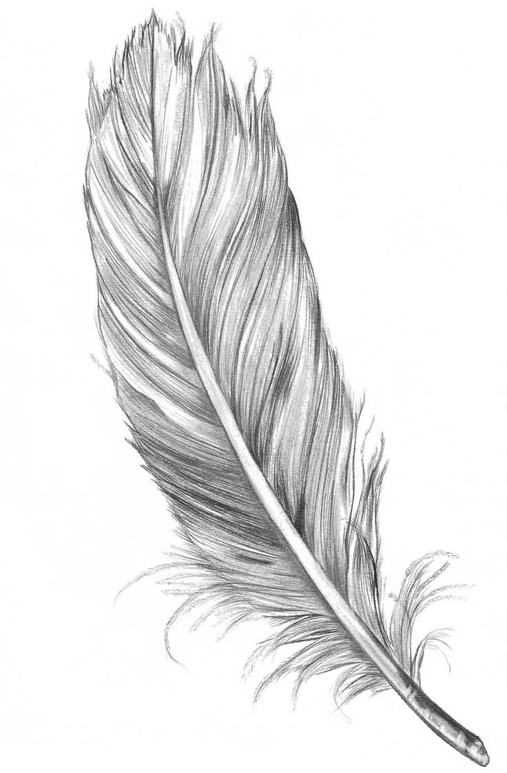 62 beautiful feather tattoos with meanings grey feather tattoo design buycottarizona Gallery