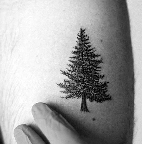 81 Pine Tree Tattoos And Ideas