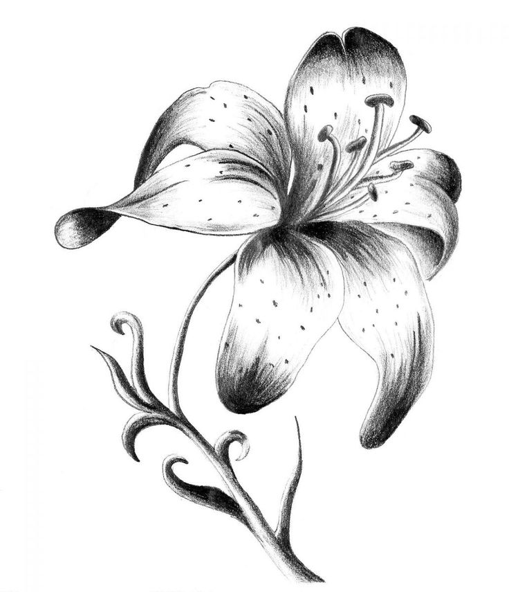 43a1934cd Black And Grey Small Lily Tattoo Design