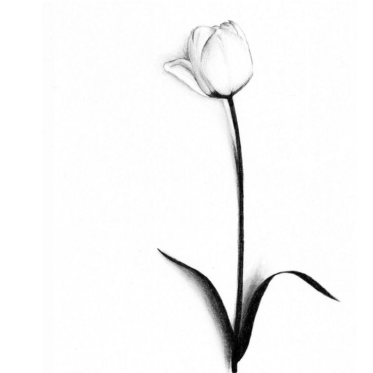82 tulip tattoos meanings and ideas for Sample of tattoo design