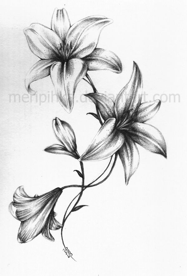 Grey And White Lily Flower Tattoos Design