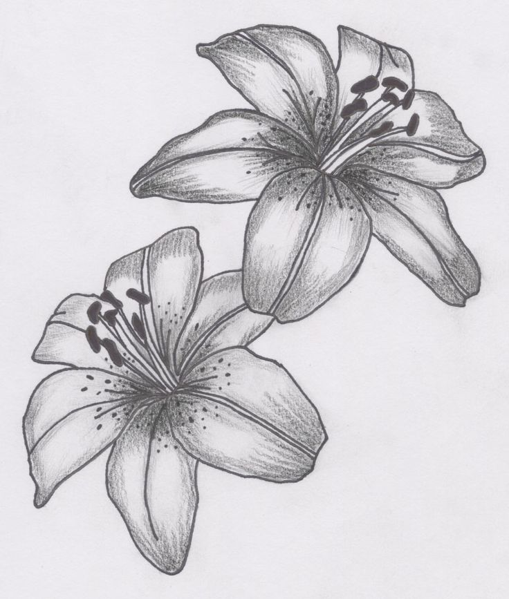 Grey and White Lily Flower Tattoo Sample