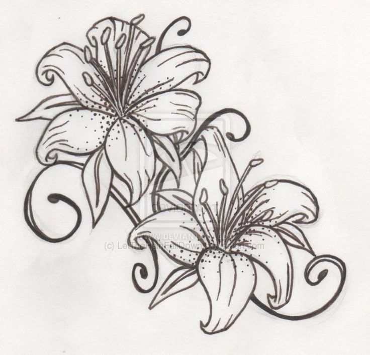 Outline Lily Flowers Tattoo Design