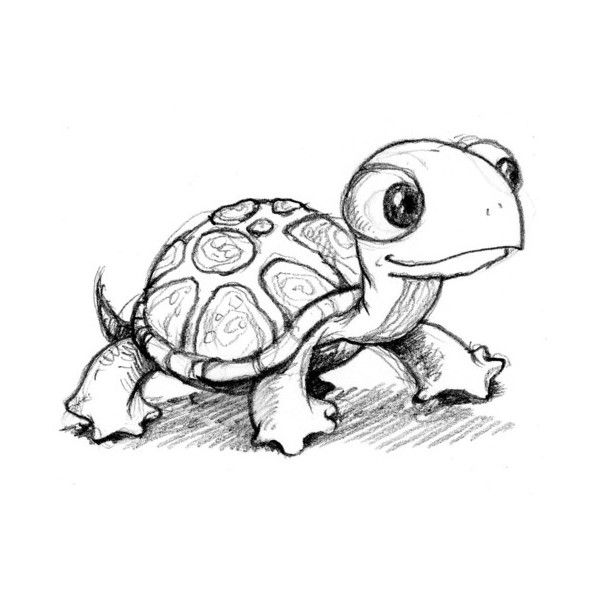 Turtle Line Drawing Tattoo : Outline turtle tattoo design
