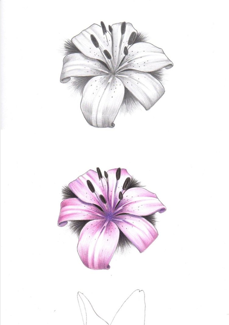 Pink And Grey Lily Flowers Tattoos Design