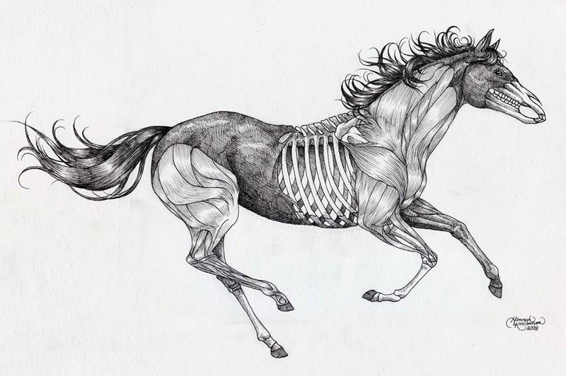 running horse skeleton tattoo design