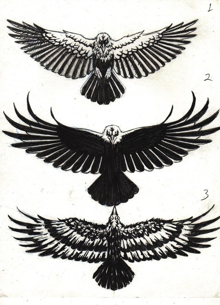 63+ Latest Raven Tattoos Ideas
