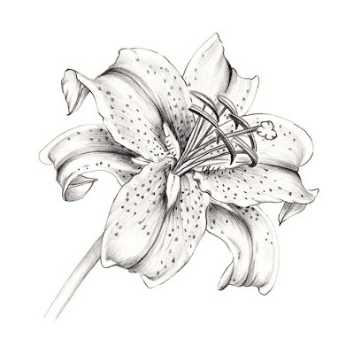 White Lily Flower Tattoo Design