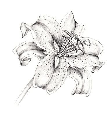 White Lily Flower Tattoo Design