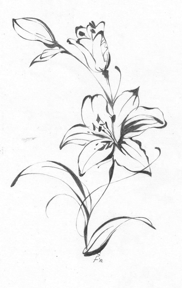 White and Black Lily Flower Tattoo Design