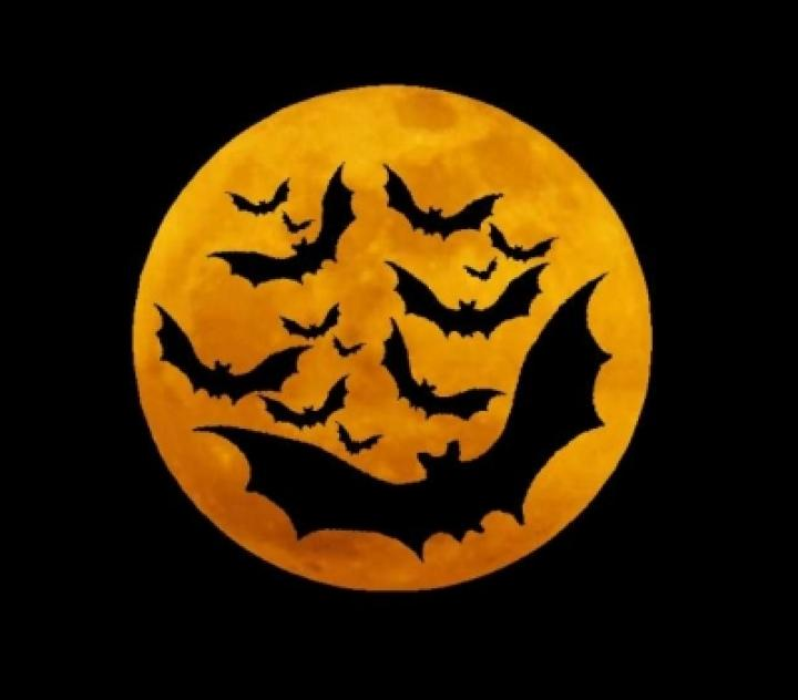 Bats Flying In Front Of Full Moon Happy Halloween Wishes