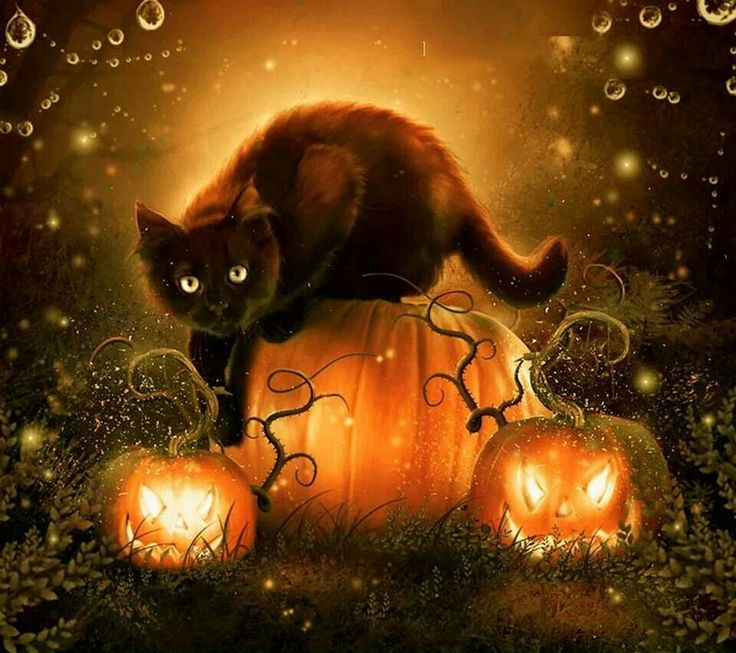 Black Cat Sitting On Pumpkin Happy Halloween