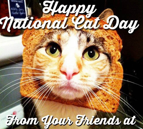 Happy National Cat Day From Your Friends Cat With Toast 50 most amazing world cat day 2017 greeting picture ideas