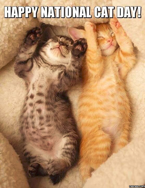 Happy National Cat Day Two Cute Cats Picture happy national cat day two cute cats picture