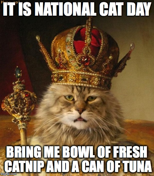 It Is National Cat Day King Cat Picture it is national cat day king cat picture