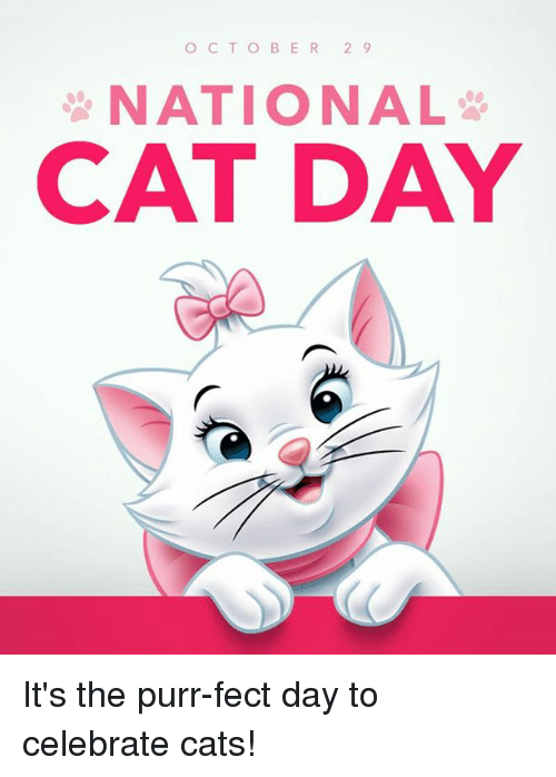 October 29 National Cat Day Card