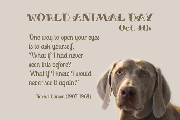 World Animal Day October 4 Rachel Carson Quote