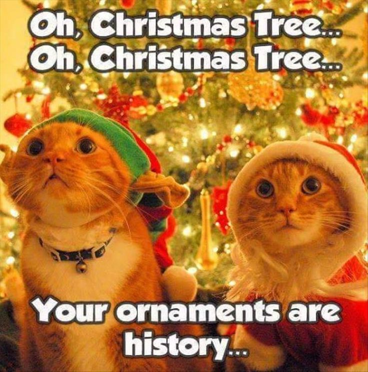 Funny Cats Celebrating Christmas