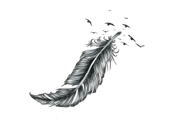 Black And White Eagle Feather Best Eagle 2018