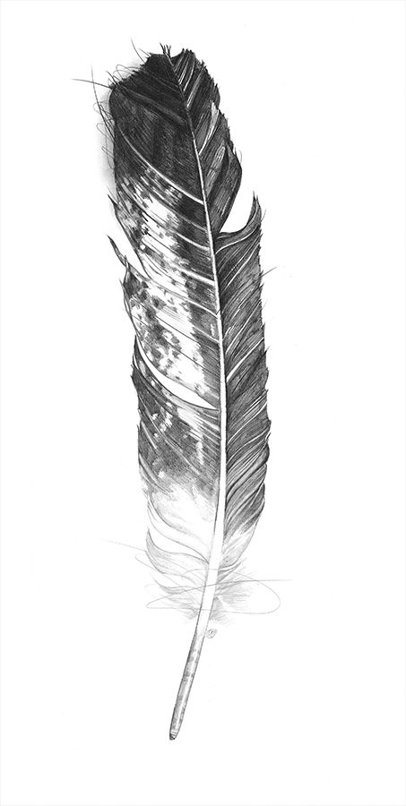 546b75005 65+ Eagle Feathers Tattoos & Designs With Meanings