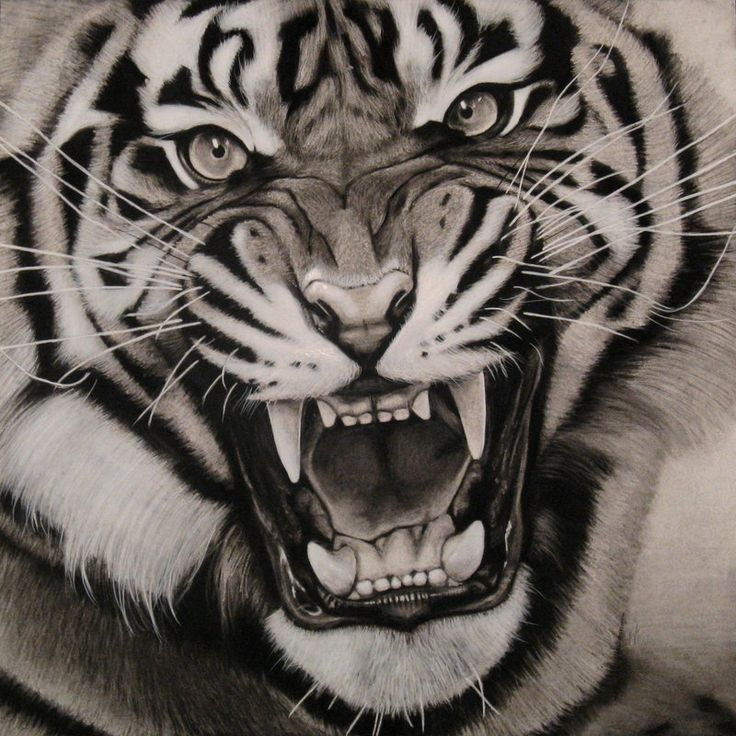 Black & White Realistic Tiger Tattoo Design - photo#33