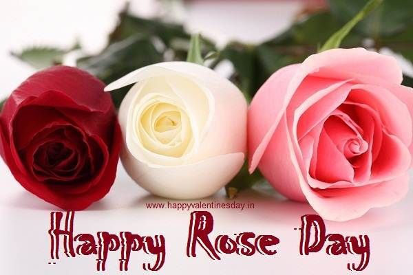 50 Best Rose Day 2018 Wish Pictures And Images