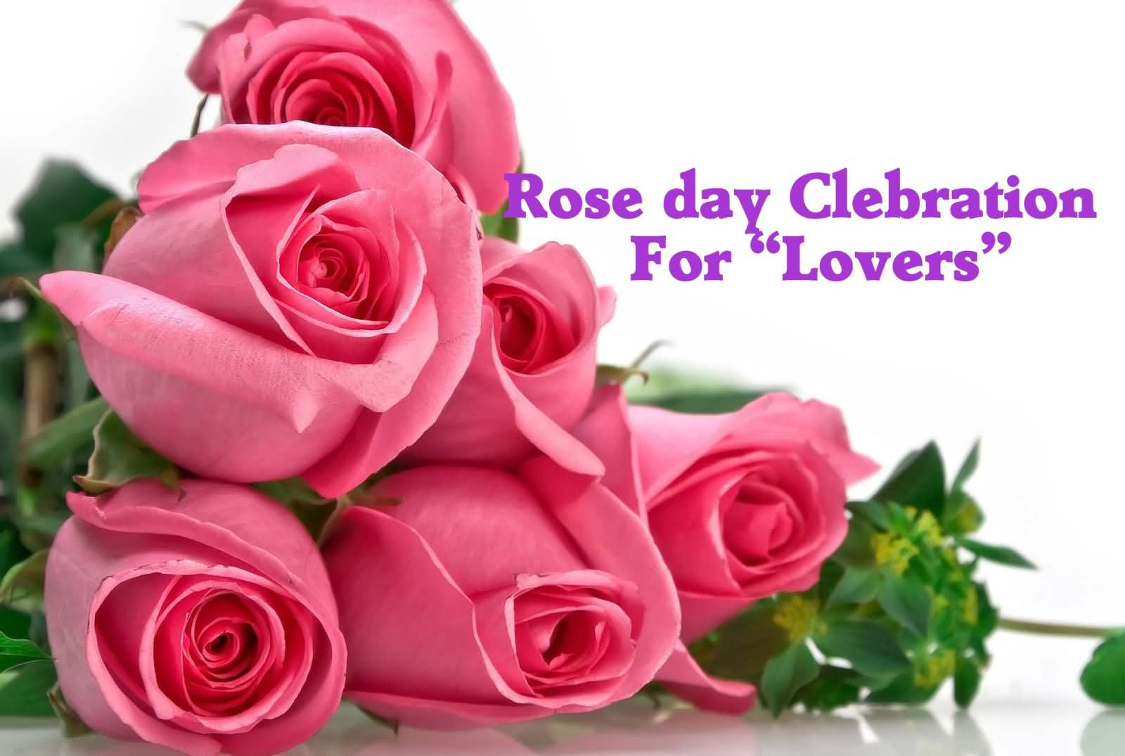Happy Rose Day Celebration For Lovers Beautiful Pink Roses Wallpaper