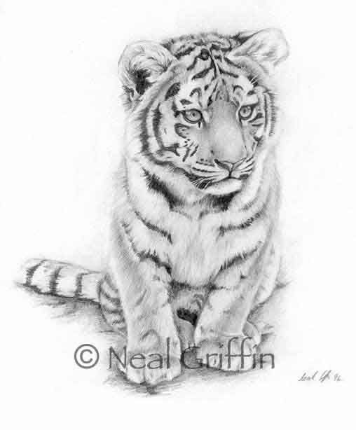 Grey Ink Realistic White Baby Tiger Tattoo Design By Neal Griffin