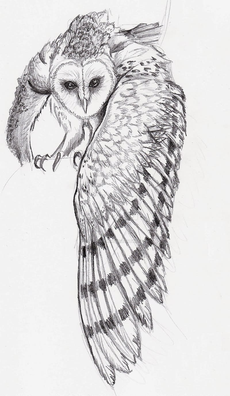 Barn Owl Tattoo Sketch By Tokyoshorty on DeviantArt