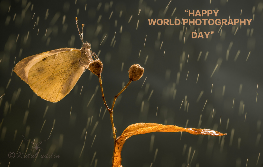 75 Best World Photography Day 2018 Wish Pictures And Images