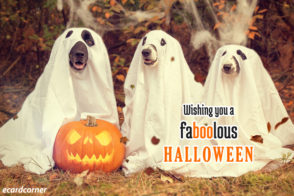 wishing you a faboolous halloween funny dogs in ghost costume