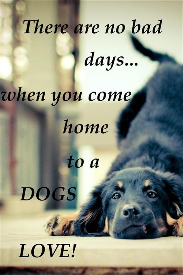 50+ Best Pet Quotes And Sayings